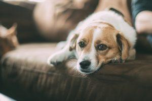 Lei do Condomínio: o morador tem o direito de manter a quantidade de animais que for conveniente para si.