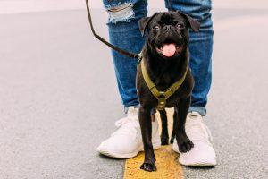 É essencial seguir algumas dicas para um melhor passeio com os pets.